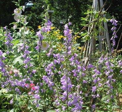 394flowers.jpg
