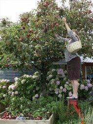 ediblelandscaping022613.jpg