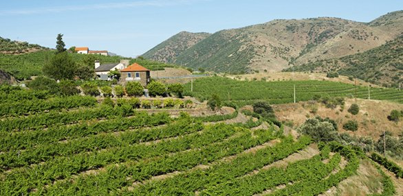 586x286FoodDouroValleyVineyards.jpg