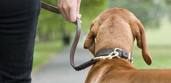 madisonparks-dogs070814.jpg