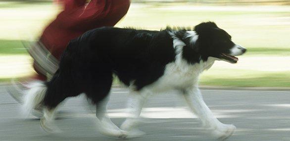 madland-madisonparks-dogs071214.jpg