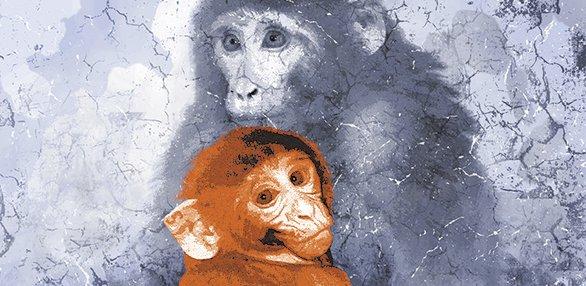 uw-monkeys-maternaldeprivation090814.jpg