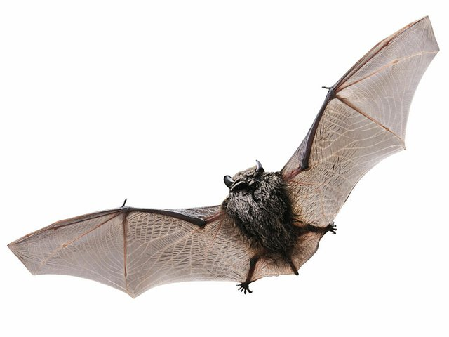Nature-BatsLeadArt02-05-2015.jpg