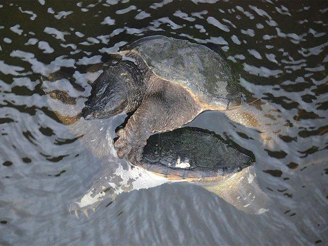 Snapshot-Dead-Turtle-04302015.jpg