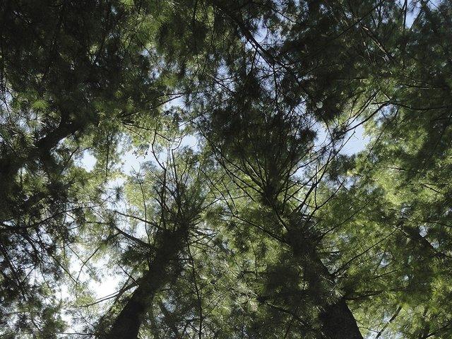 Abode-Tree-Canopy-4x3-cr-Carolyn-Fath-04302015.jpg