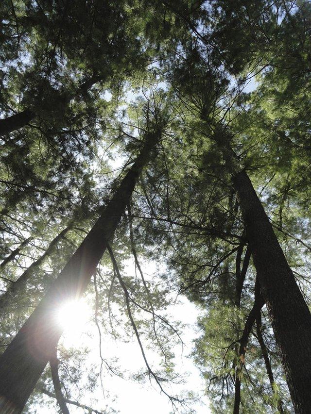 Abode-Tree-Canopy-cr-Carolyn-Fath-04302015.jpg
