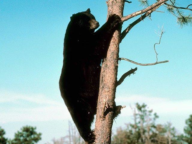 Tech-Science-Bears-08272015.jpg