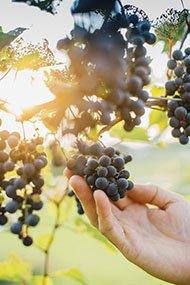 Winemaker-KorbDavid2-crSharonVanorny-Drinks2015.jpg