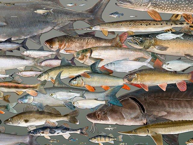 Arts-visual-fishes-of-WI-09242015.jpg