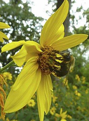 rec-Lakeshore-sunflower-crBrynScriver-10012015.jpg