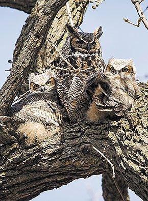 rec-Lakeshore-Nature-Preserve-owls-crJeffMillerUWMadison-10012015.jpg