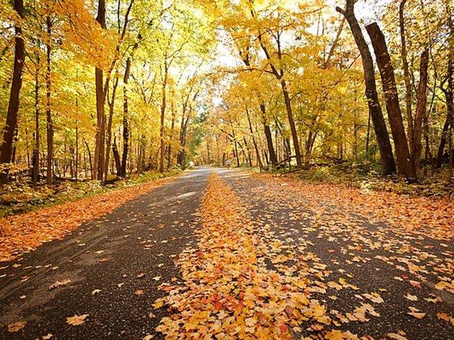 Recreation-LeafPeeping-Arboretum-crJeff MillerUW-Madison-10082015.jpg