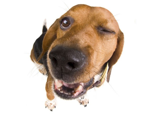 WhatToDo-Dog-10292015.jpg