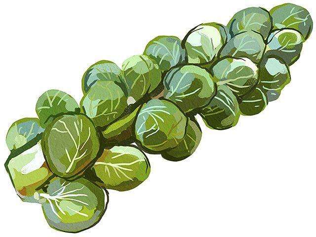 Cover-Sprouts-crJenniferLeaver-11122015.jpg