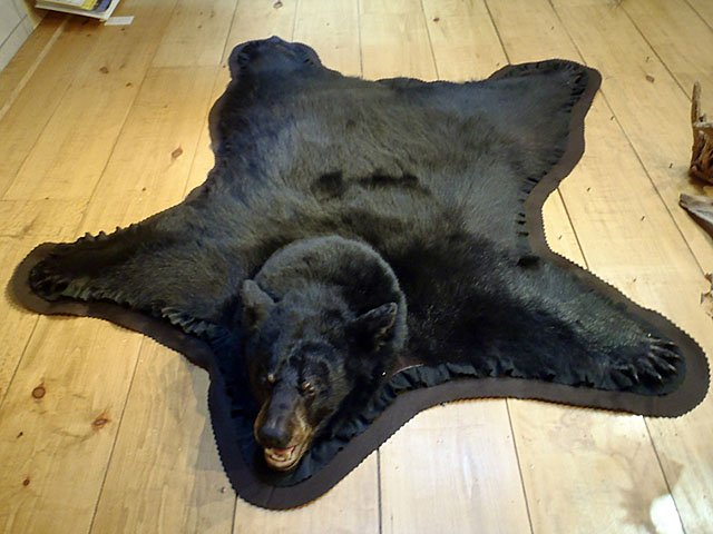 Emphasis-Taxidermy-BearRug-crRenéeGregory-11192015.jpg