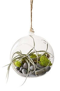GiftsCoworkers-MakerskitHangingAirPlant198px-2015.jpg