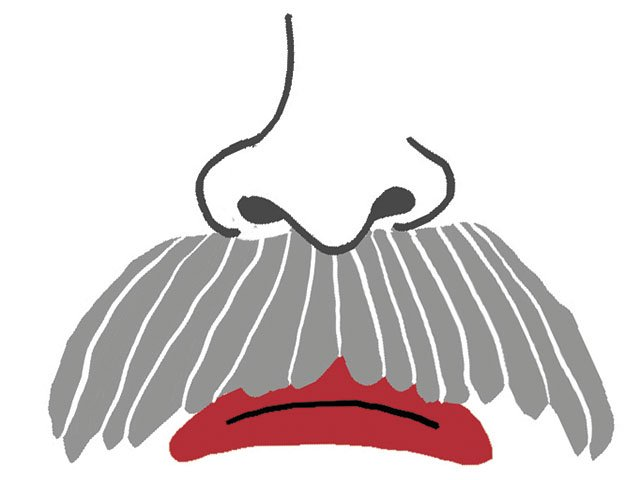 Cover-SoglinMustache-crPhilipAshby-11262015.jpg