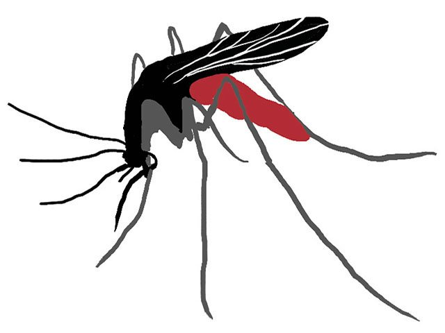 Cover-Mosquito-crPhilipAshby-11262015.jpg