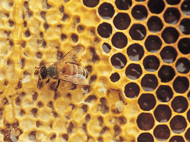 Food-EatsEvents-Bees-01142016.jpg