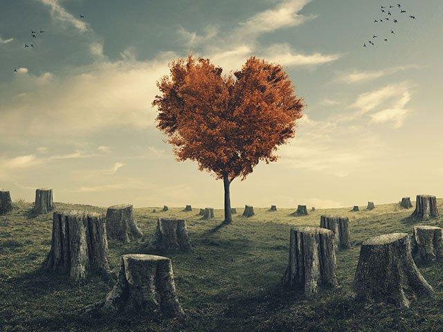 News-SaveTheTreeMovement-01212016.jpg