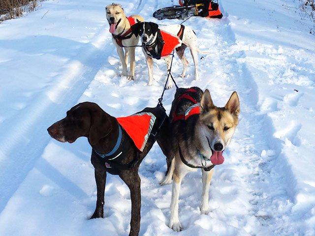 News-Clark-Deanna-dogs-04132016.jpg