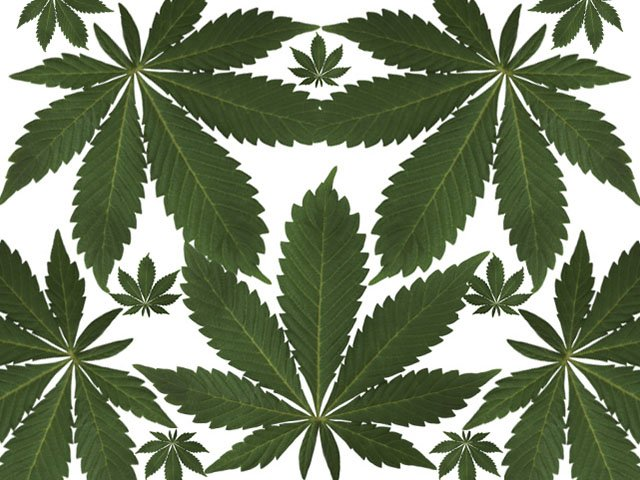 News-Pot-Leaf-04202016.jpg