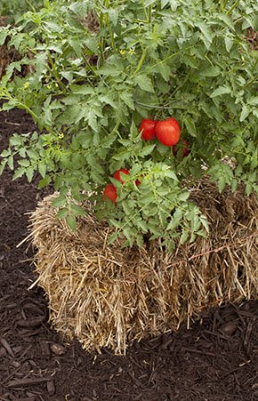 abode-Straw-Bale-tomato-crTracyWalsh-05052016.jpg