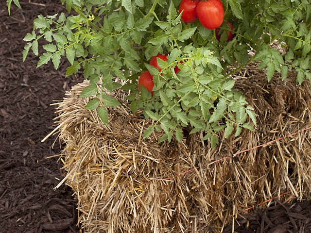 Straw bale growing