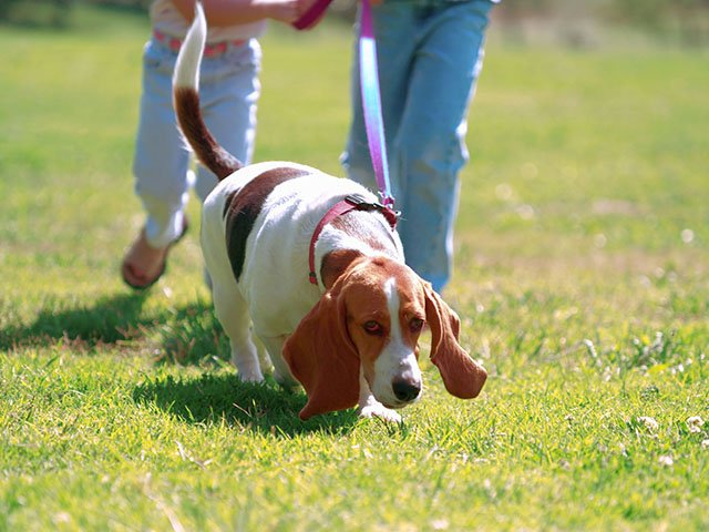 News-Leash-Laws-05122016.jpg