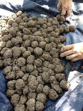 Emphasis-Seed-Bombs-crMegRothstein-06022016.jpg