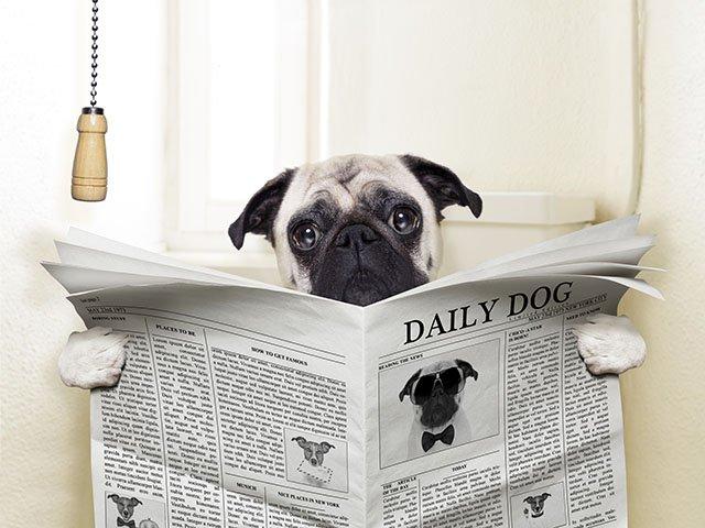 News-Poo-Prints-06202016.jpg