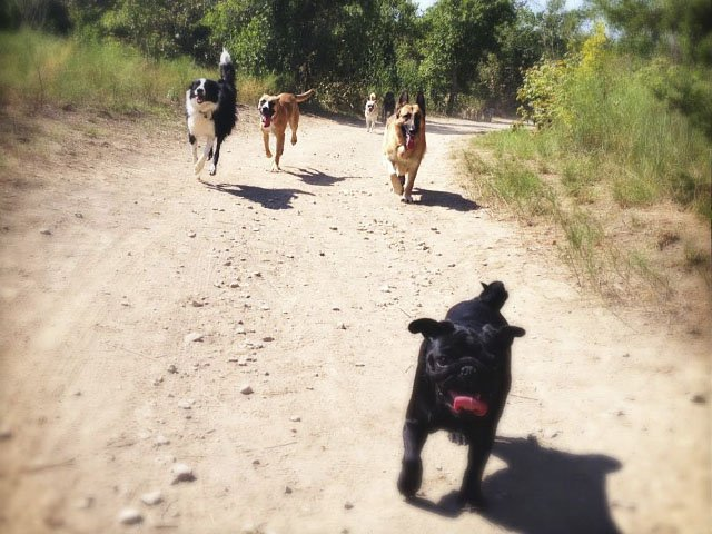 Recreation-Doggy-By-Nature-Trail-07142016.jpg