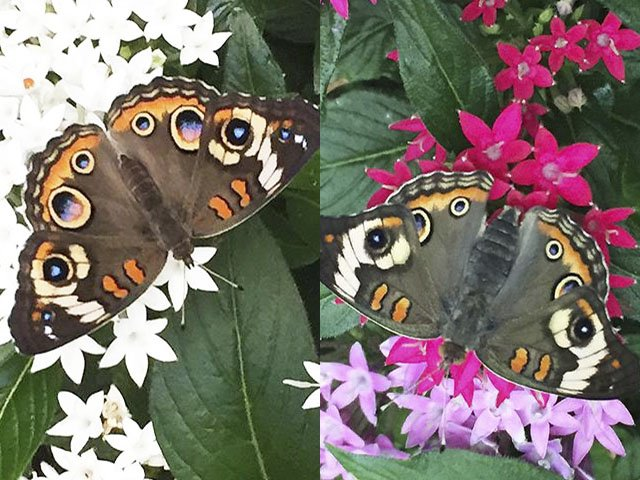 What-To-Do-Olbrich-Butterfly-crCarolynFath-08042016.jpg