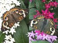 What-To-Do-Olbrich-Butterfly-crCarolynFath-08042016.jpg