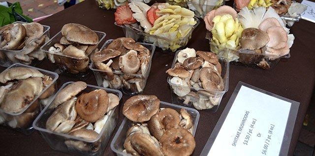 Food-mushrooms-crDylanBrogan-08152016-.jpg