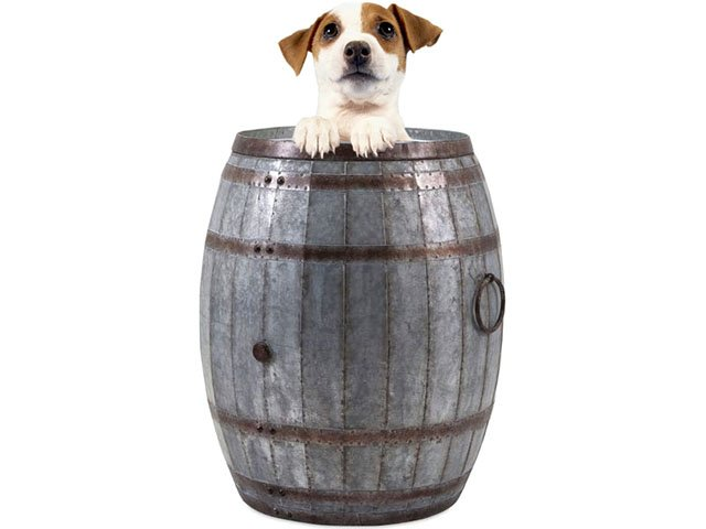 What-To-Do-Bark-&-Wine-09292016.jpg