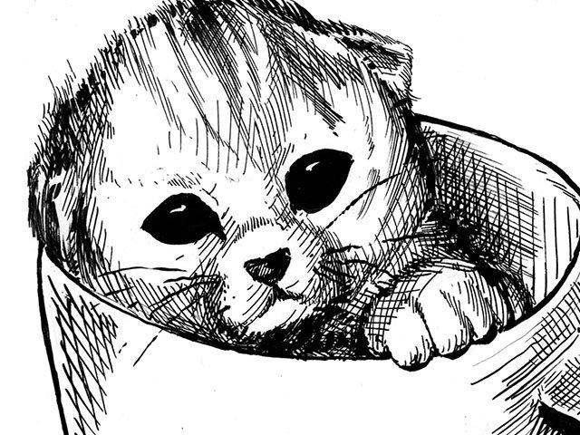 OnTheSquare-Kitten-teaser-11102016.jpg