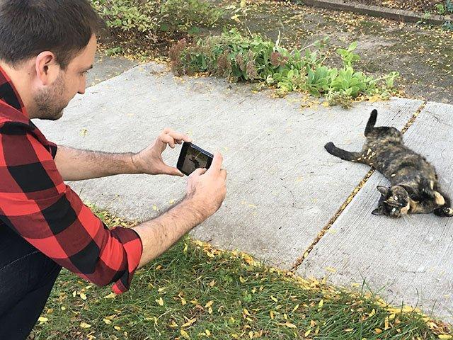 snapshot-Cats-Madison-teaser-crJasonNolen-11102016.jpg