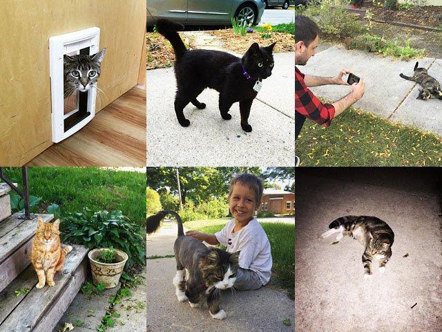 snapshot-Cats-Madison-crJasonNolen-11102016.jpg