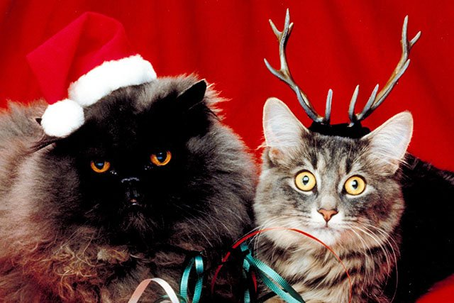 What-To-Do-Christmas-12012016.jpg