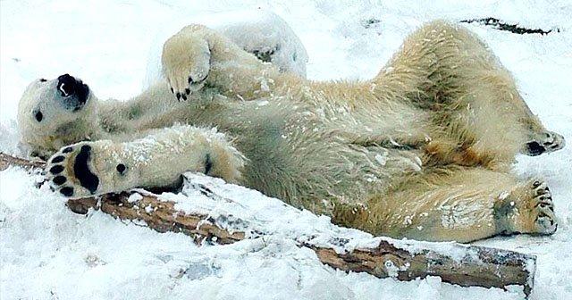rec-polar-bearHenryVilasZoo-01262017.jpg