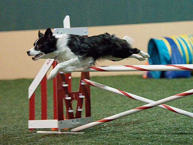 Emphasis-Canine-Sports-Zone-Charisma-03162017.jpg