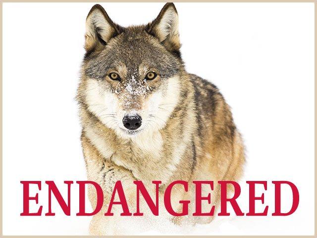 Endangered Isthmus Madison Wisconsin