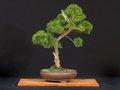 calendar-bonsai.jpg