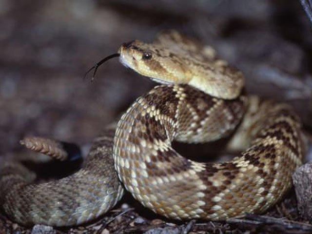 Tech-snake-venom-crSharonandDanny Brower-07272017.jpg