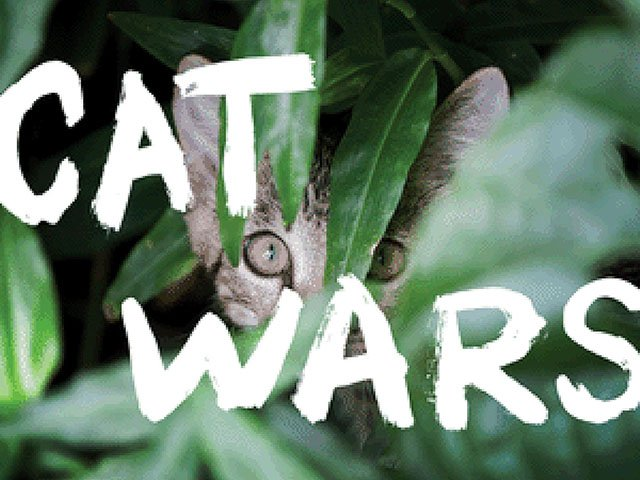 What-To-Do-Cat-Wars-11092017.jpg