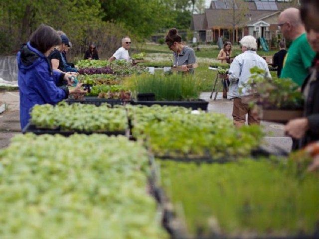 calendar-troy-plant-sale.jpg