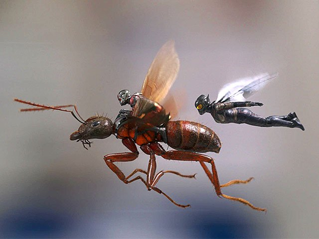 Screens-Ant-Man-Wasp-07052018.jpg