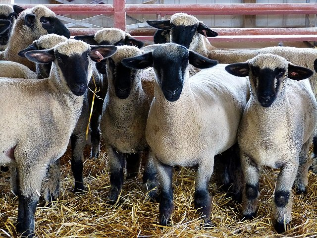 calendar-WI-sheep-wool-festival.jpg