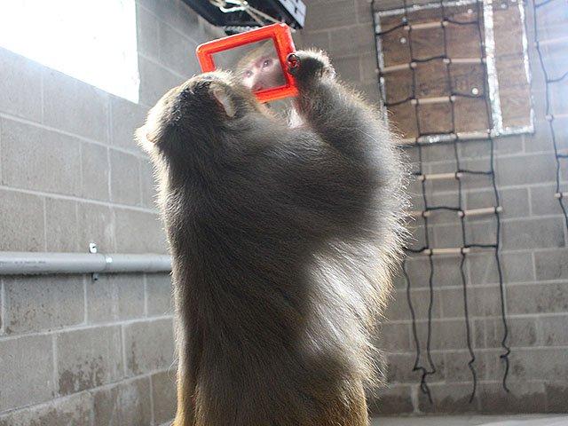 Snapshot-Primates-Inc-crBreanneCyr-08302018.jpg
